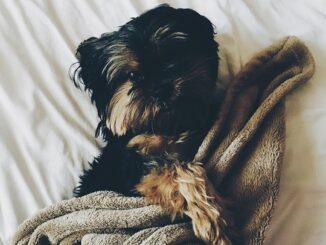Sort hund med tæppe.